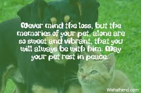 Loss Of A Cat Quotes Stunning Sympathy Messages For Loss Of Pet