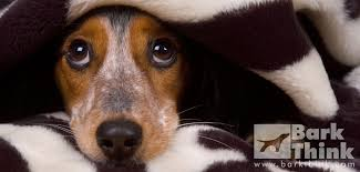 Can I Give My Dog Melatonin Dose Rates Info Side Effects