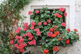 Kostenlose Foto Blume Alt Rose Romantik Fassade Nostalgie