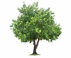 gardentown poster tree