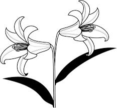 夏の花3 02 ユリ 花の無料イラスト素材 イラストポップ