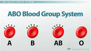 Blood Types Abo System Red Blood Cell Antigens Blood