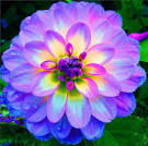 25  best Flowers Pics ideas on Pinterest   Beautiful flowers pics ...
