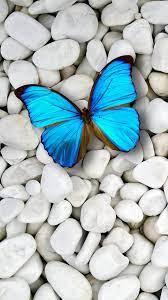 Blue Butterfly Wallpaper Iphone X