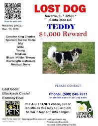 Missing Dog Poster Maker Tirevi Fontanacountryinn Com