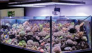 led aquarium light review led