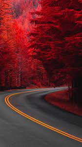 Pine Red Trees Road 4K Ultra HD Mobile ...