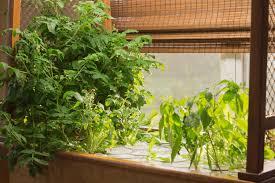 Balcony Kitchen Garden My Hydroponic Garden Sassy Susan Creates