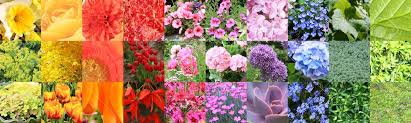 Composite Color Chart Collage Of A Large Variety Of Flowers And