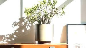 target plant pots with wood stand case study cylinder plant pot with stand small case study target plant pots