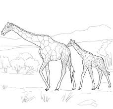 Mother And Baby Giraffe Coloring Page Animal Coloring Pages