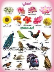 Flower Chart In English Flowers Birds In Tamil Chart