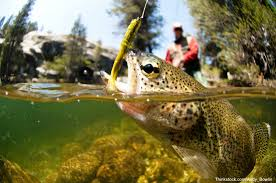 fly fishing images 0687 jpg hd wallpaper and background photos
