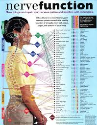 Nerve Function Chart Chiropractic Care Health Chiropractic