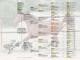 Sample Pedigree Chart Arlene Magid Pedigree Charts