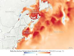 Ocean Temperature Charts Atlantic Watery Heatwave Cooks The Gulf Of Maine