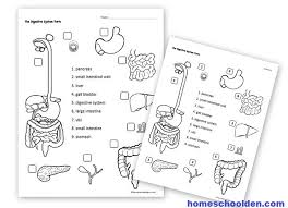 Digestive System Flow Chart Worksheet Human Body Activities Digestive System Homeschool