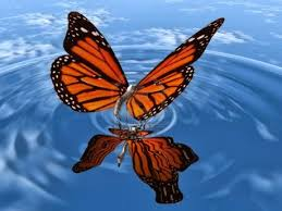 Awesome Free Butterfly Live Wallpapers ...