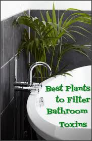 plants for windowless office. windowless bathroom plants for office