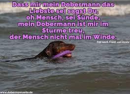 Dobermann Zitate Und Sprüche