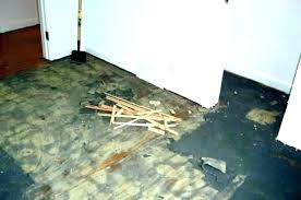 how to remove carpet glue from wood floors removing carpet glue adhesive from wood stairs tile