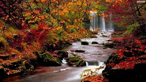 Autumn Forest Wallpapers