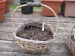 John Scheepers Kitchen Garden Seeds Seed Catalogs Pegplant