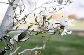 to prune spring flowering trees and shrubs