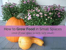 how to grow food in small spaces even