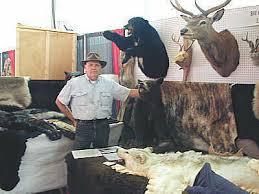 real bear skin rugs animal taxidermy