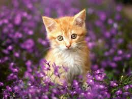 Image result for beautiful cats