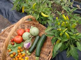 Kitchen Gardening Tips Garden Ideas Kitchen Gardening Tips Kitchen Garden Tips Kerala