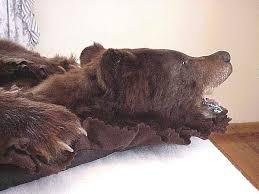 black bear rug cinnamonblackbearrug1 jpg 58302 bytes