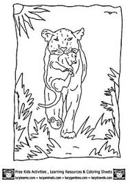 Small Picture Handsome jackal coloring pages Download Free Handsome jackal
