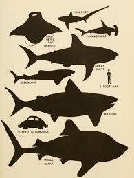 Shark Size Chart Size Sharks Tumblr