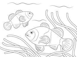 Disegno Di Pesce Pagliaccio Da Colorare Disegni Da Colorare E