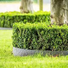 ecolat garden edging grey 10m lawn