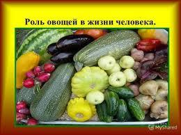 Презентация на тему Блюда из свежих и варёных овощей класс г  Роль овощей в жизни человека Значение овощей Содержат витамины углеводы минеральные