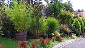 Small Picture Landscape Problems Portland Residential Landscaping Dennis 7
