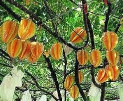 20 Best Plants Of Jamaica  Fruit Trees Images On Pinterest Jamaican Fruit Trees