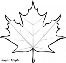 Small Picture Amazing Of Elegant Maple Leaves Coloring Pages Maple Leaf 2144