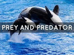 emperor penguin predators and prey. Simple Emperor 15 Inside Emperor Penguin Predators And Prey S