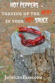 Hot Peppers Turning Up The Heat In Your Hot Sauce Recipes