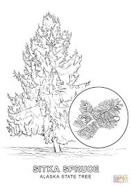 Small Picture Alaska State Tree coloring page Free Printable Coloring Pages
