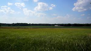 tall green grass field. Tall Green Grass Waves In The Wind On A Farm Kansas Summer Time. Machine Shed Is Distance. Stock Video Footage - Videoblocks Field