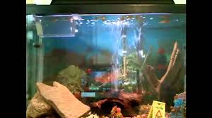 Funny Fish Tank Decorations Similiar Bubble Fish Tank Keywords