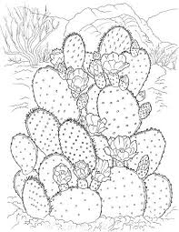 Small Picture Prickly Pear Cactus coloring page Super Coloring flori