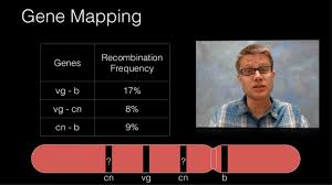 Gene Mapping Problems Genetic Recombination And Gene Mapping