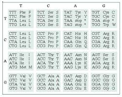 Dna Sequence Chart Deducing Amino Acid Sequence From A Dna Sequence Biology