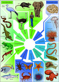 Difference Between Amphibians And Reptiles Venn Diagram Difference Between Vertebrates And Invertebrates